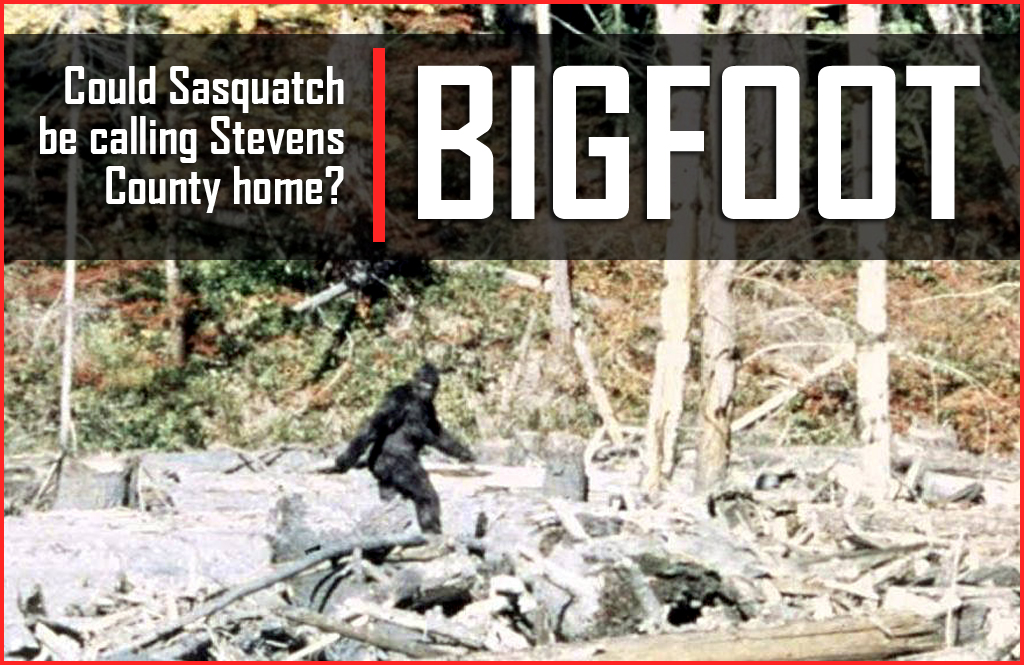 BIGFOOT: NE Washington a hot spot for Sasquatch