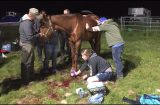 Chewelah Vet assistant helps with injured horse at Tournament of Inland Empire