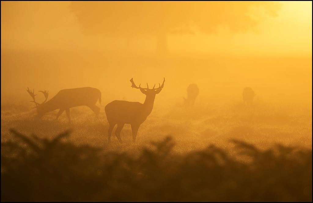 Deer Park check station sees 26 whitetail bucks harvested