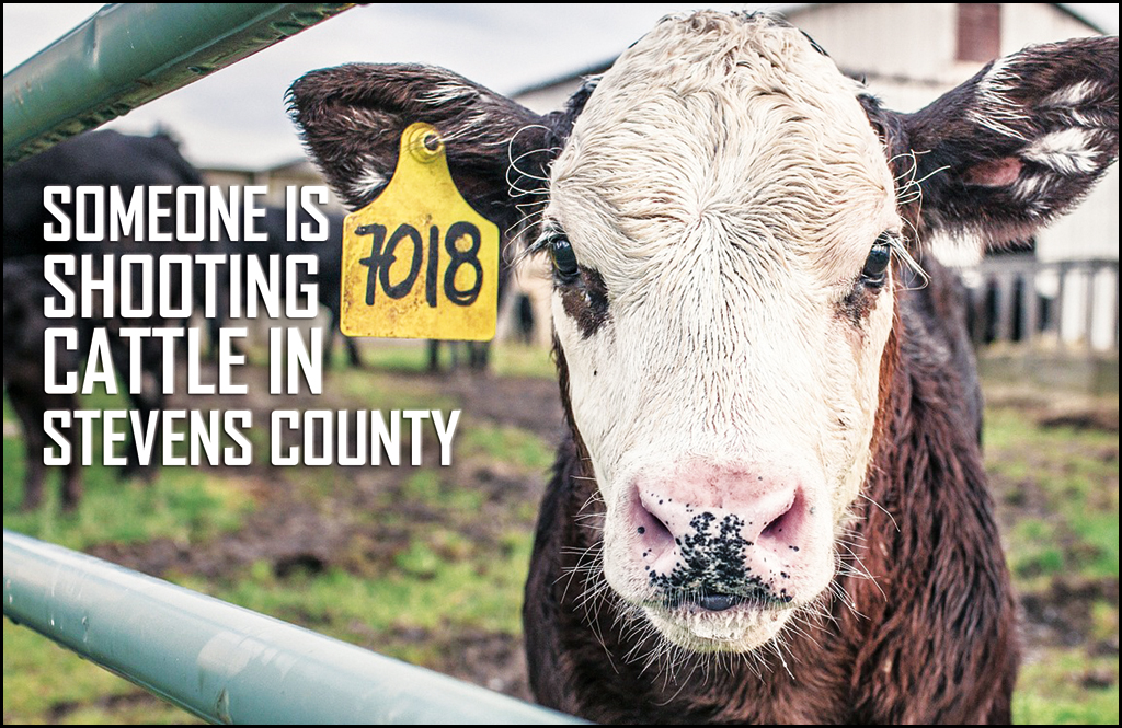 Cattlemen offering up to $15,000 for info on cattle shootings