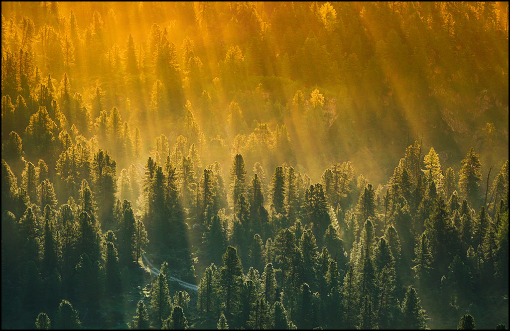 McMorris Rogers introduces bill promoting forest management