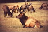 Nine St. John and Colfax area men to be charged with illegal elk killings