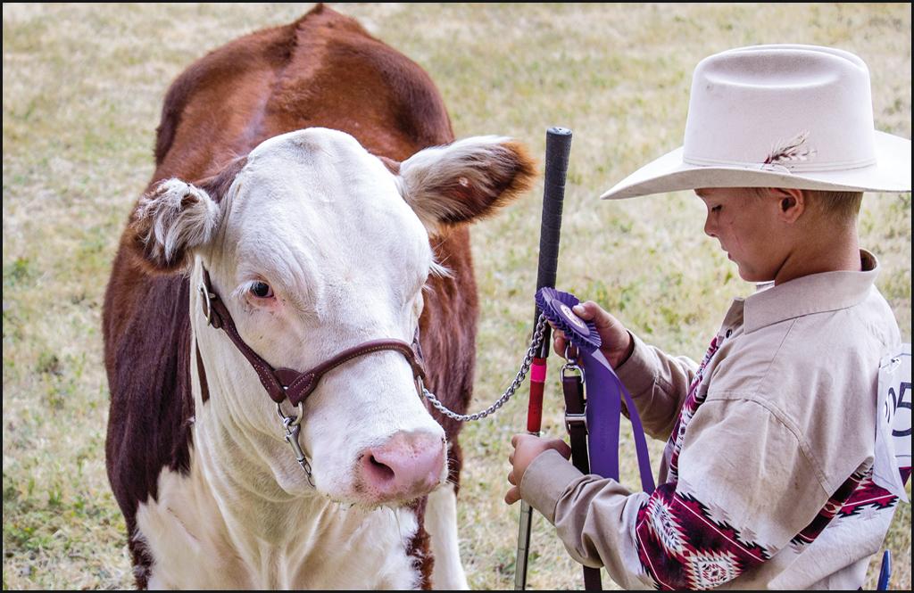 Stevens County Cattlemen to host fat stock sale Aug. 22