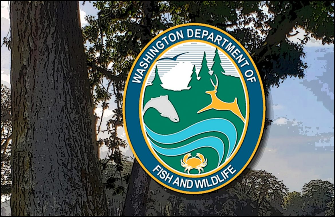WDFW QUESTION OF THE WEEK: How can I support local wildlife?